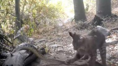 सांप को देख गुस्साई बिल्ली ने कर दिया हमला, दोनों की लड़ाई का जबरदस्त वीडियो हुआ वायरल (Watch Viral Video)