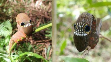 Alien Caterpillar Pics: अजीबो-गरीब कैटरपिलर की तस्वीरें सोशल मीडिया पर हुईं वायरल, उसके कार्टून जैसे चेहरे को देख दंग रह जाएंगे आप