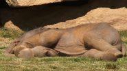 गहरी नींद में सो रहे नन्हे हाथी को जगा-जगा कर परेशान हुई मां, गार्ड ने ऐसे की हथिनी की मदद