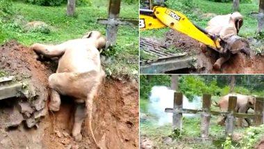 कर्नाटक: कीचड़ में फंसे हाथी की बाल-बाल बची जान, वन अधिकारियों ने ऐसे किया रेस्क्यू (Watch Viral Video)