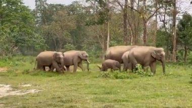 सेहत के प्रति सजग हाथियों का परिवार, मॉर्निंग वॉक पर निकला एक साथ (Watch Viral Video)