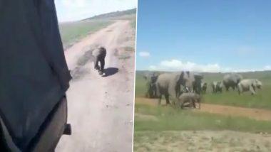 जंगल में सफारी को देखकर उसके पीछे दौड़ने लगा नन्हा हाथी, फिर जो हुआ… (Watch Viral Video)