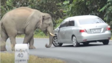 Viral Video: गुस्साए हाथी ने सड़क पर जमकर मचाया उत्पात, गजराज ने खिलौने की तरह हवाई में उड़ाई गाड़ियां
