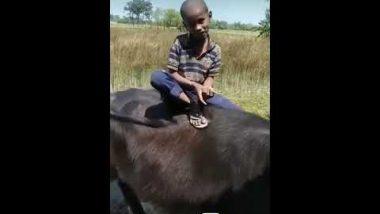 Viral Video: इस बच्चे ने भैंस पर बैठकर गाया 'मुझसे शादी करोगी गाना' जादुई आवाज़ सुनकर लोग हुए फैन, देखें वीडियो
