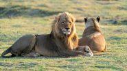 उत्तर प्रदेश: इटावा सफारी पार्क में दो शेरनियां हुई COVID-19 संक्रमित, दोनों को आइसोलेशन में रखा गया