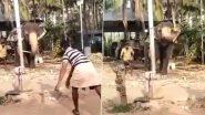हाथी के साथ क्रिकेट खेलते हुए नजर आए लोग, आप भी देखें कैसे गजराज ने छुड़ाया लोगों का पसीना