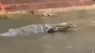 Monitor Lizard: कोलकाता के बांगुर एवेन्यू में सड़क पर दिखी मॉनिटर छिपकली, वीडियो हुआ वायरल