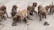 Viral Video: एक केकड़े को घेरकर उसके साथ ऐसी हरकत करने लगी बंदरों की सेना, मजेदार वीडियो हुआ वायरल