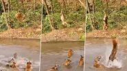 Viral Video: पानी में मस्ती करते बाघों को बंदर ने दिखाया टशन, पेड़ की डाली पर लटक कर ऐसे किया परेशान