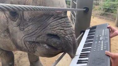 अपने 12वें जन्मदिन पर खुशी से झूम उठा राइनो, जबरदस्त अंदाज में बजाने लगा कीबोर्ड (Watch Viral Video)