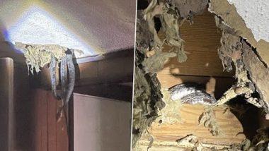 Snakes In The Roof! घर की छत से कई सांप निकलने के बाद शॉक हुआ परिवार, ऐसे सामने आया पूरा मामला