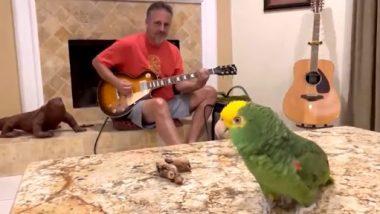 Parrot Singing Video: मालिक की गिटार की धुन पर यह तोता गा रहा है फ्रीस्टाइल वोकल्स, वीडियो देख हो जाएंगे खुश
