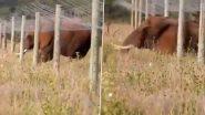 Smart Elephant Video: सोलर की जालियों को पार करने के लिए हाथी ने उठाया समार्ट कदम, देखिए कैसे क्रॉस की जाली