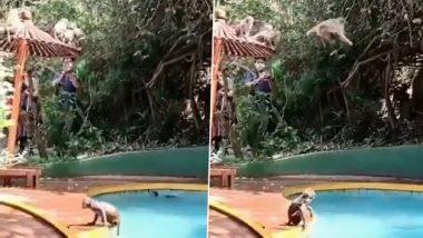 Monkey Viral Video: बंदरों के झुंड ने स्विमिंग पूल में की पार्टी, वीडियो देख नहीं रोक पाएंगे अपनी हंसी