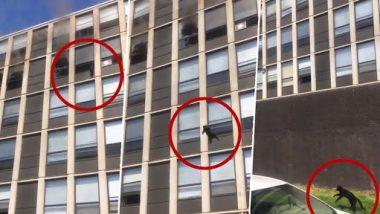 Cat Jumps From 5th Floor Video: आग से बचने के लिए बिल्ली ने लगाई 5वीं मंजिल से छलांग, उसके बाद जो हुआ...देखें वीडियो