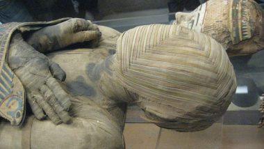 Homo कौन थे? इजराइल में एक नयी रहस्यमयी मानव प्रजाति की खोज, लाखों साल पुरानी खोपड़ी भी मिली
