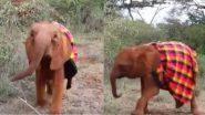 झाड़ियों के बीच रंगीन कंबल पहनकर अटखेलियां करता दिखा नन्हा हाथी, मनमोहक वीडियो हुआ वायरल (Watch Viral Video)