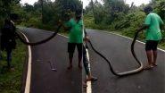 विशालकाय किंग कोबरा को झाडियों से खींचकर लाया शख्स, फिर सांप के साथ किया कुछ ऐसा… (Watch Viral Video)