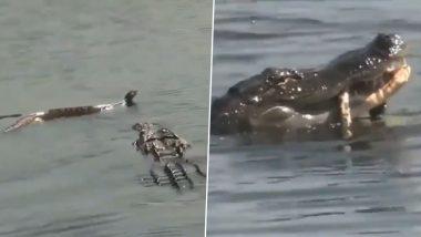 पानी में दिखा सांप तो शिकारी मगरमच्छ ने किया जबरदस्त अटैक, ऐसे किया पल भर में काम तमाम (Watch Viral Video)
