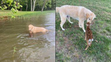 झील में डूब रहा था हिरण का बच्चा, मसीहा बनकर कुत्ते ने ऐसे बचाई उसकी जान (Watch Viral Video & Pics)