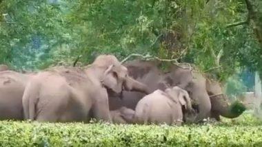 Elephant Powers: एक अनोखा पशु जो पैरों से देखता है! जानें और क्या-क्या खूबियां हैं हाथी के अंगों की!