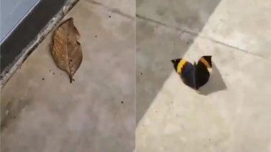 क्या आपने कभी सूखी पत्ती को तितली बनकर हवा में उड़ते देखा है? Viral Video देख चकरा जाएगा आपका सिर