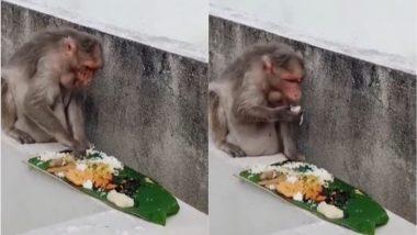 केले के पत्ते पर तरह-तरह के स्वादिष्ट व्यंजनों का बंदर ने उठाया लुत्फ, मजेदार वीडियो जमकर हो रहा है वायरल (Watch Viral Video)