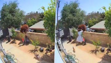 Viral Video: अपने पालतू कुत्तों को बचाने के लिए भालू से भिड़ गई महिला, सोशल मीडिया पर वायरल हुआ हैरान करने वाला वीडियो