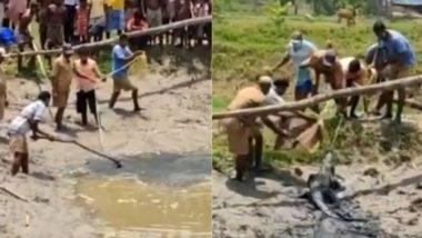Cyclone Yaas: पश्चिम बंगाल के 24 परगना में चक्रवात के दौरान रिहायशी इलाके में फंसा मगरमच्छ, ऐसे किया गया रेस्क्यू (Watch Viral Video)