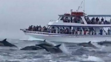 गजब! पर्यटकों से भरी टूर बोट के साथ सैकड़ों डॉल्फिन ने लगाई जबरदस्त रेस, बार-बार देखा जा रहा है यह Viral Video