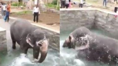 तमिलनाडु: गर्मी से निजात पाने के लिए हाथिनी ने स्विमिंग पूल में लगाई डुबकी, पानी में नहाने का ऐसे उठाया लुत्फ (Watch Viral Video)