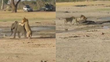 Viral Video: शिकार करने के इरादे से शेर ने किया नन्हे हाथी पर हमला, आगे जो हुआ उसे देख दंग रह जाएंगे आप