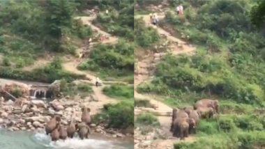 अपने इलाके में इंसानों को देख फूटा हाथियों का गुस्सा, नदी किनारे से भगाने के लिए लोगों के पीछे दौड़ा पूरा झुंड (Watch Viral Video)
