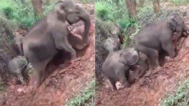 Viral Video: भारी भरकम शरीर के साथ ढलान से ऊपर की ओर चढ़ाई करता दिखा हाथियों का झुंड, प्रेरणादायक वीडियो हुआ वायरल