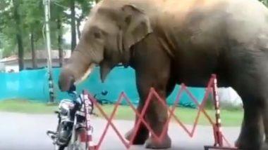 भूख लगी तो सड़क किनारे खड़ी बाइक के हेलमेट को ही हाथी ने बना लिया अपना भोजन, फिर… देखें Viral Video