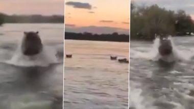 जब पर्यटकों की बोट के पीछे गुस्से में दौड़ लगाने लगा दरियाई घोड़ा, देखें कैसे आफत में पड़ी लोगों की जान (Watch Viral Video)