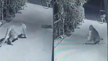 घर के बाहर सो रहा था कुत्ता, तेंदुए ने दबे पांव आकर ऐसे किया उसका शिकार, CCTV में कैद घटना का वीडियो हुआ वायरल