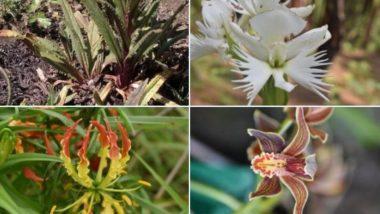 औषधीय पौधों के उत्पादन को बढ़ावा देने के लिए 2 भारतीय संस्थानों ने MoU पर हस्ताक्षर किए