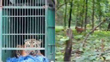 बिहार: रेस्क्यू ऑपरेशन के बाद बाघ को वाल्मीकि टाइगर रिजर्व में छोड़ा गया, देखें Viral Video