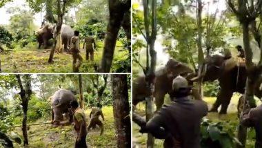 जंगली हाथी को प्रशिक्षित गजराज की मदद से किया गया काबू, इंटरनेट पर छाया यह Viral Video