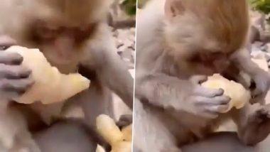 Bandar Kya Jaane Adrak Ka Swad Video: बंदर का अदरक खाता हुआ क्लिप वायरल, वीडियो देख लोटपोट हुए लोग