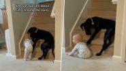 Video: बच्चे को सीढ़ियों पर चढ़ने से बचाने के लिए कुत्ते ने किया कुछ ऐसा, वीडियो देख पिघल जाएगा दिल
