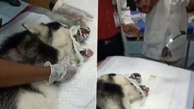 Viral Video: डॉक्टर्स ने कुत्ते के पेट निकाला फेस मास्क, नेटिज़न्स ने मास्क को सुरक्षित तरीके से फेंकने का किया आग्रह