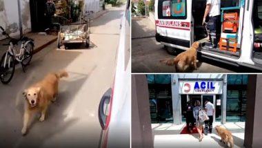 Viral Video: बीमार मालिक की एम्बुलेंस के पीछे-पीछे वफादार कुत्ता पहुंचा अस्पताल, वीडियो देख हो जाएंगे इमोशनल