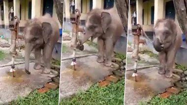 Viral Video: पानी पीने के लिए हाथी के बच्चे ने खुद चलाया हैंडपंप, मनमोहक वीडियो ने इंटरनेट पर लोगों का जीता दिल