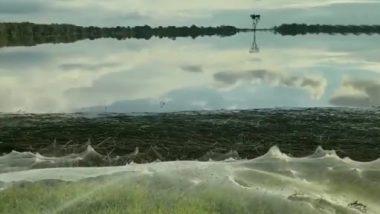 बाढ़ के बाद ऑस्ट्रेलिया के बुशलैंड में दिखा मकड़ियों के जालों का विशाल ब्लैंकेट, वीडियो देख रह जाएंगे दंग