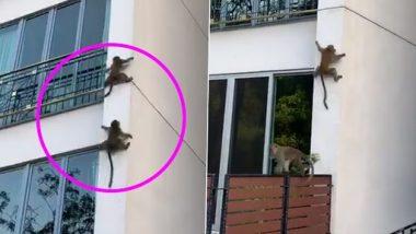 Monkey Viral Video: दो बंदरों का ऊंची इमारत पर फिसलते हुए क्लिप वायरल, वीडियो देख नहीं रोक पाएंगे हंसी
