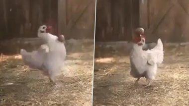 Viral Video: मुर्गे ने अंडे के साथ किया कूल स्टंट, ट्विटर यूजर्स ने कहा आफ्टर इफेक्ट्स, देखें वायरल वीडियो