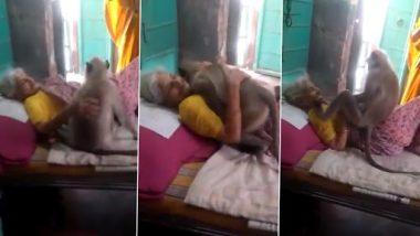 Video: बड़े प्यार से लंगूर ने दादी को लगाया गले और सहलाया सिर, वीडियो हुआ इंटरनेट पर वायरल