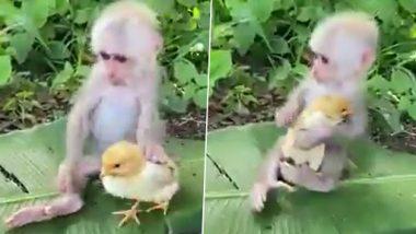 Video: बेबी मंकी और चूजे को एक साथ खेलते हुए देख बन जाएगा आपका दिन, देखें वायरल हो रहा मजेदार वीडियो
